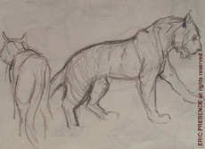 ZooSketches01