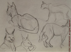 ZooSketches02
