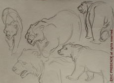 ZooSketches06